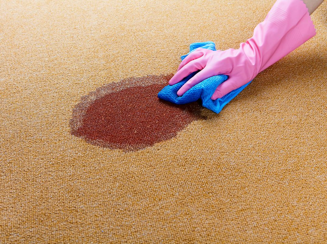 Stain removal being taken care of by MQ Carpet Cleaning at a Mesquite TX home.